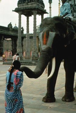 Elephant in South India.