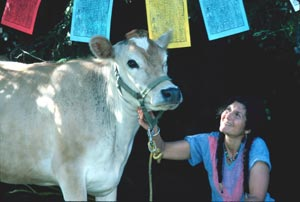 Arlene Blum and Nutmeg the Cow at the first Himalayan Fair.